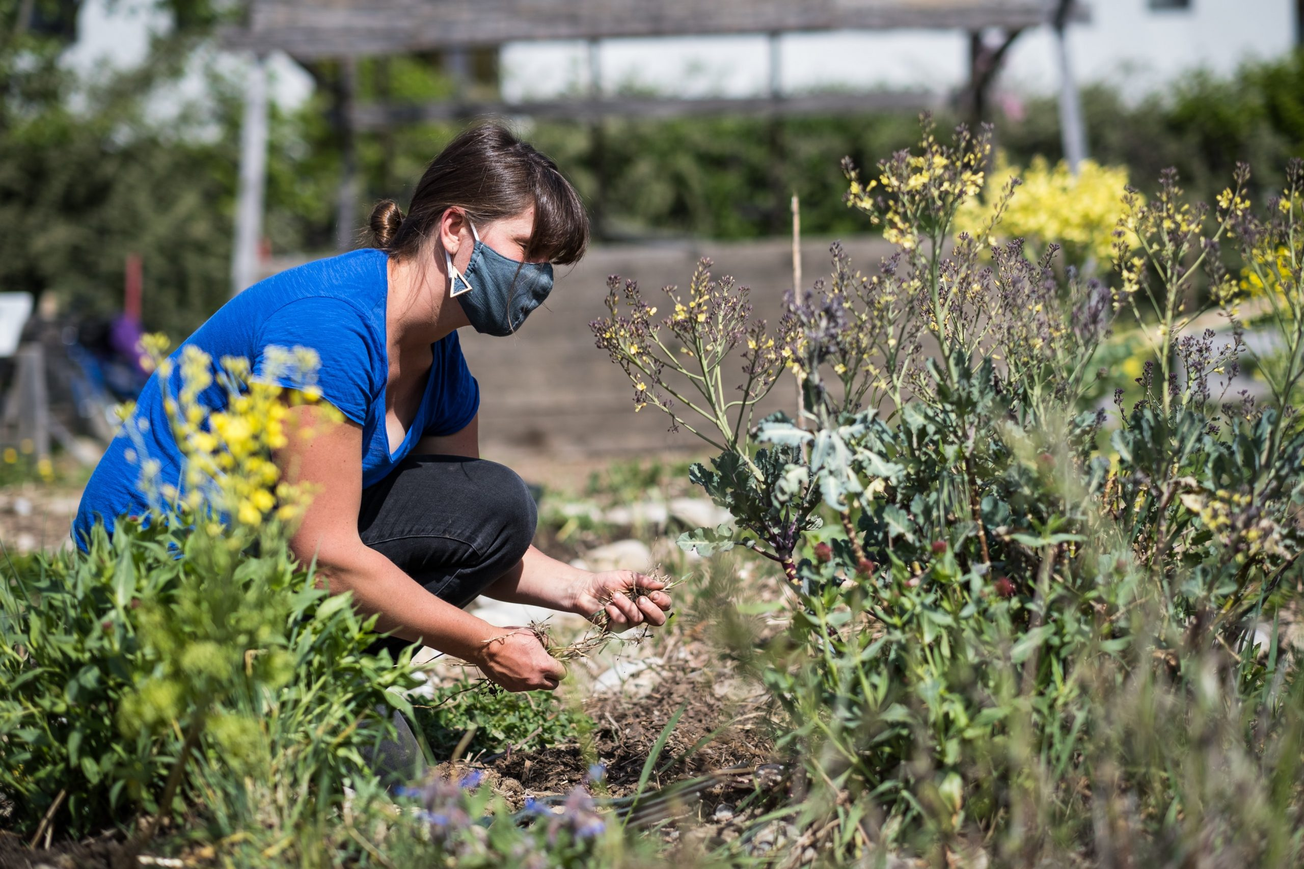 times-are-hard-gardeners-can-help